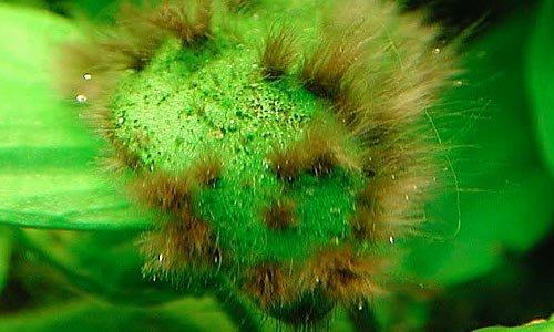 Карантин аквариумных растений