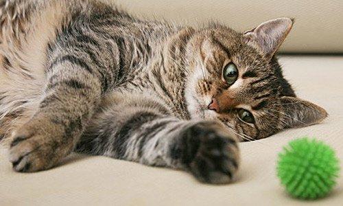 Артрит и артроз у кошек - симптомы и лечение