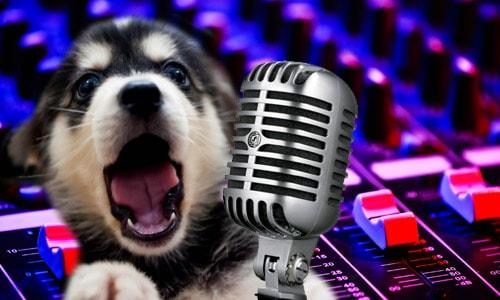 Песни про собак