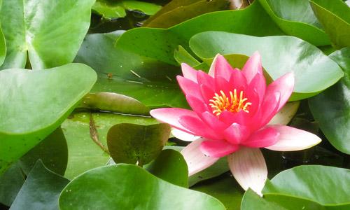 Чем болеют аквариумные растения